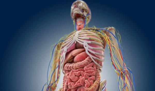 مكونات الجسم البشري Media-GRGQG-GFSSSRQQ-PQQLL-LLPXR-GFSSRPWFLL-LLPXR-GFSSRPWQRGXR-X-FWGRRQFPSL