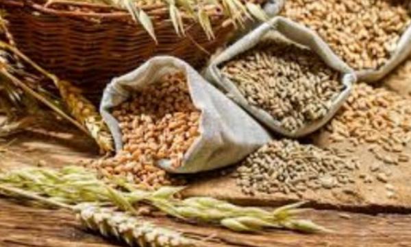 FAO : La production mondiale de céréales devrait atteindre...